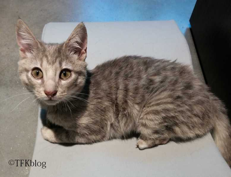 7bd535ac2cb203 Tails from the Foster Kittens~  A very special Toesday  Natalie ...