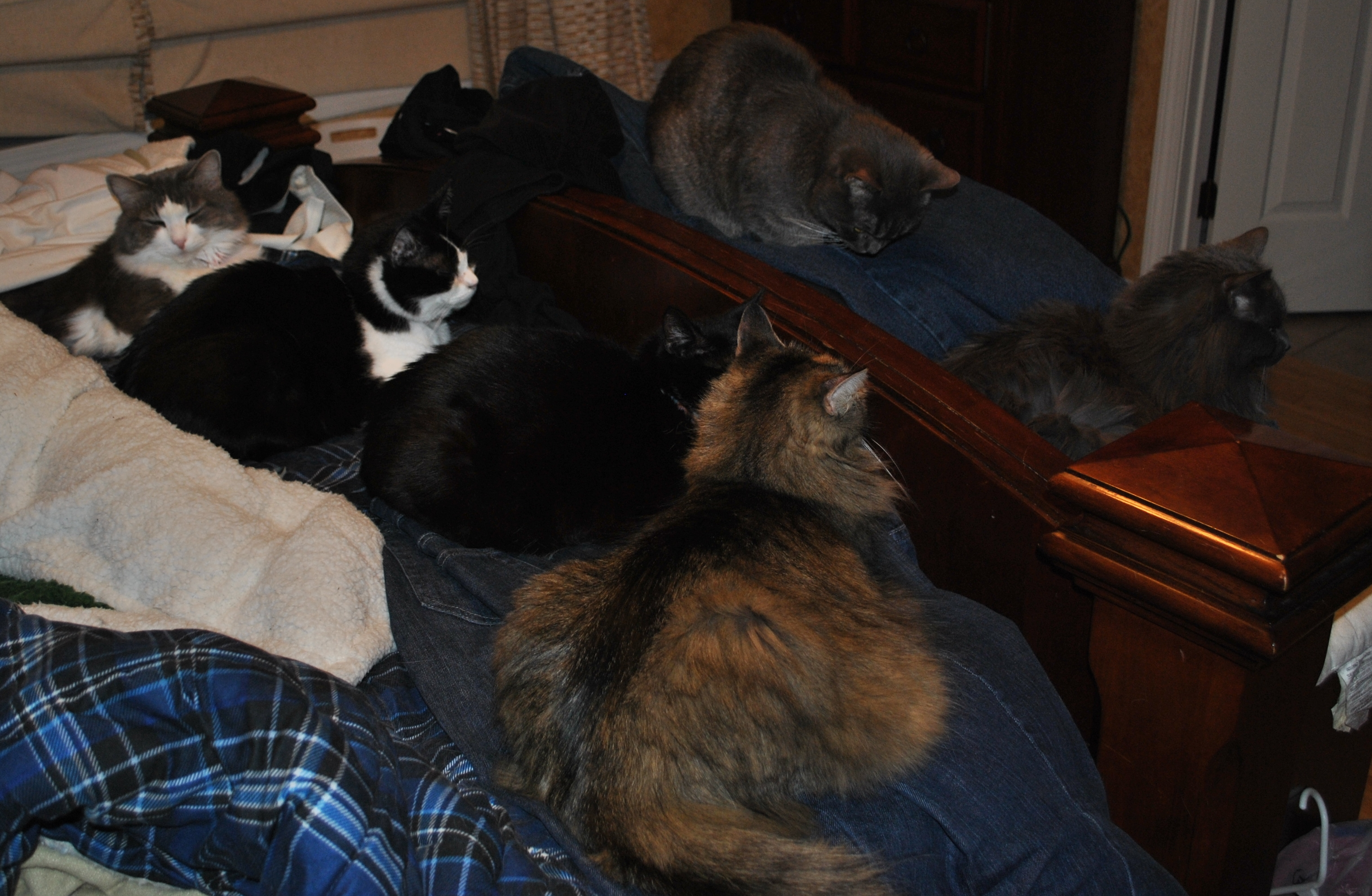six adult cats at the edge of the bed