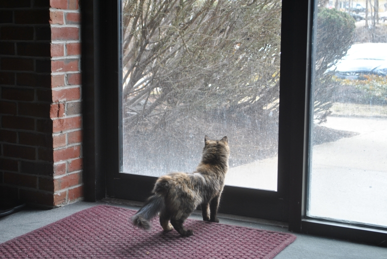 small tortie cat looking out glass door to the outside