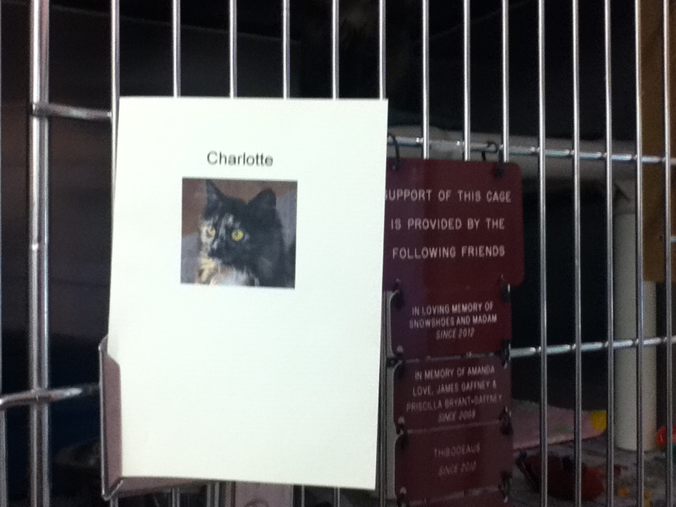 Charlotte's write up on her cage door at the shelter