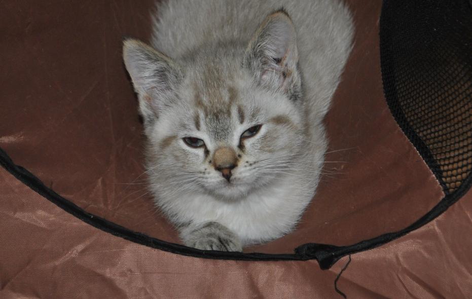 Kitten looking smug