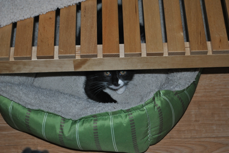 black and white kitten hiding under a table
