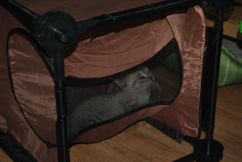 small kitten hiding in tunnel