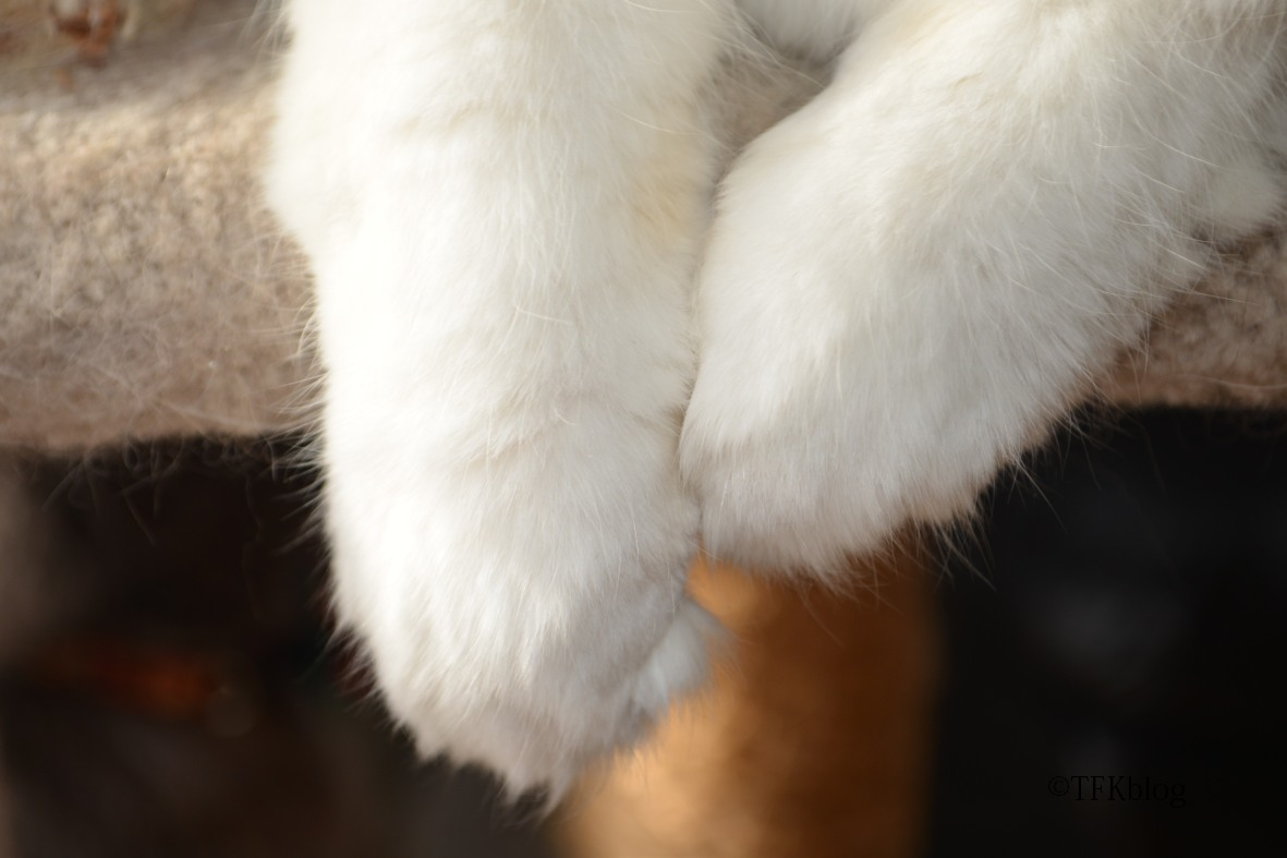 Muffin's feet
