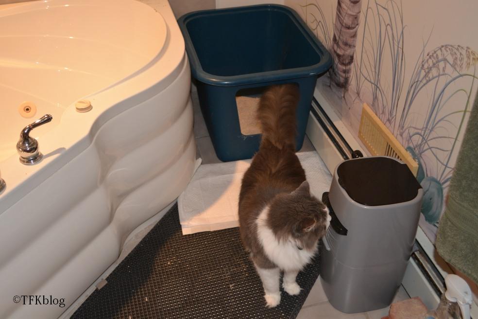 kitten tips training