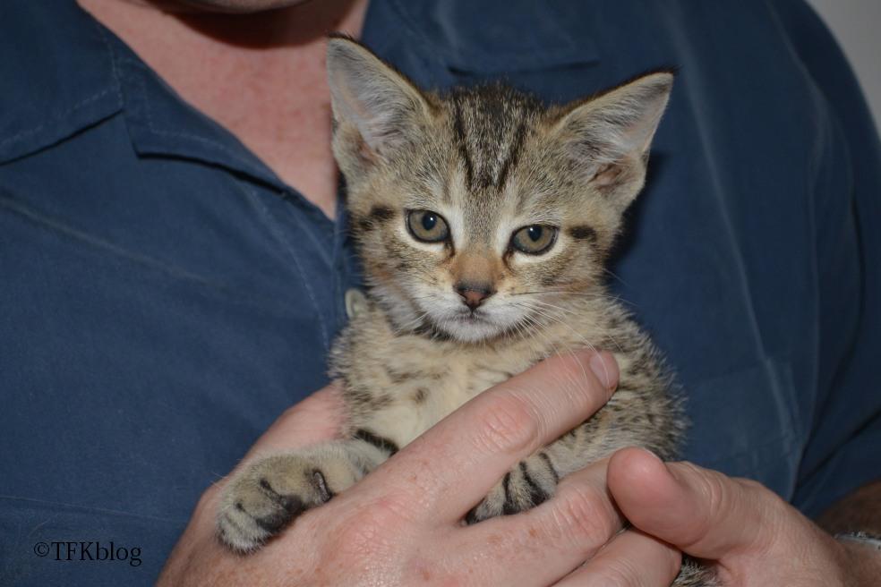 hartz topical flea treatment cats