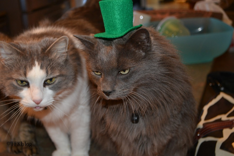 Jack in a St. Patrick hat