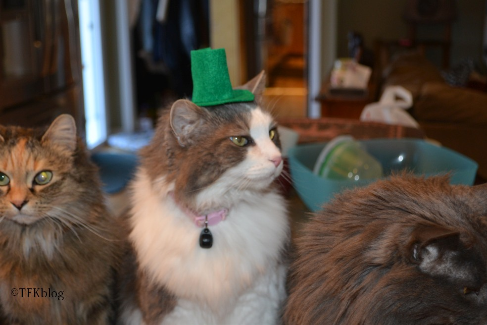 Muffin in a St. Patrick hat