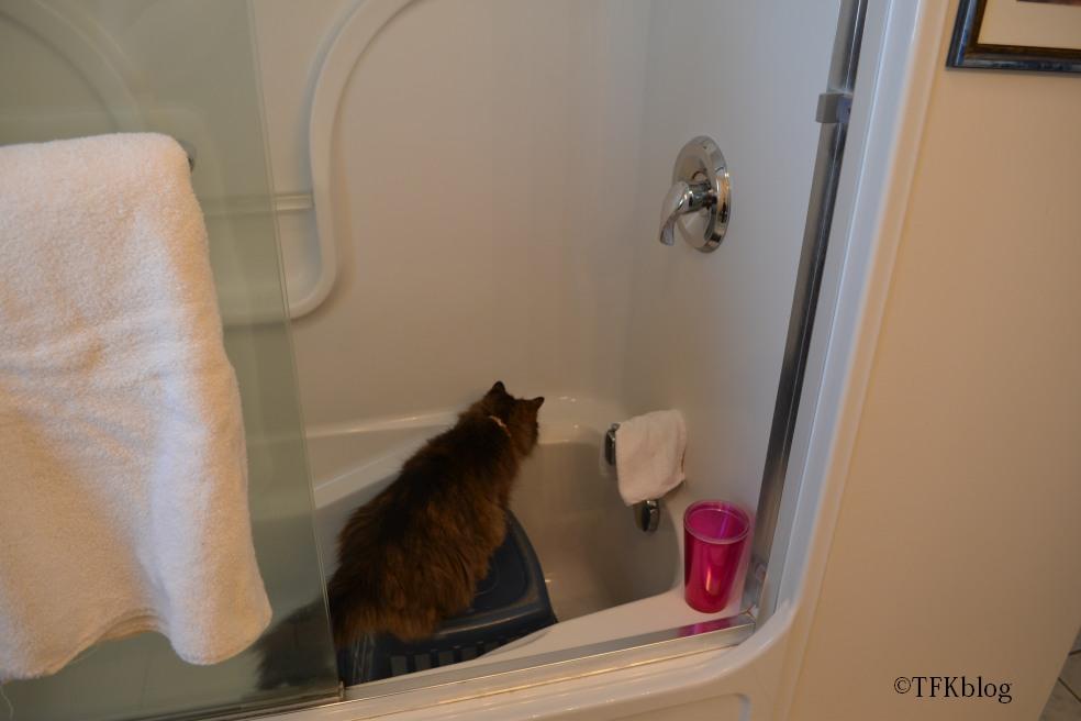 cat sebaceous cyst home treatment