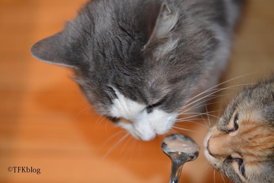 Getting Salmon Oil Into Cat
