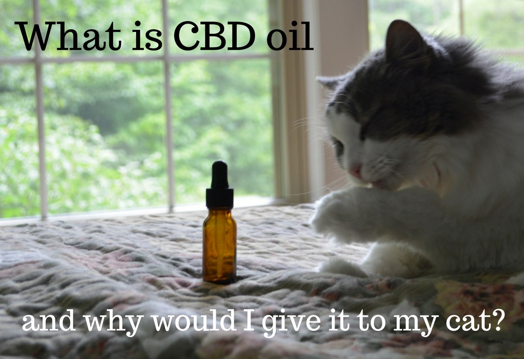 JustCBD CBD oil for Cats