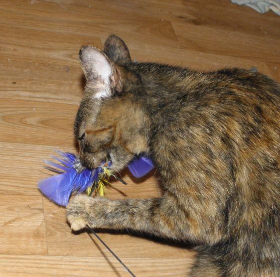 revolution flea and tick for kittens