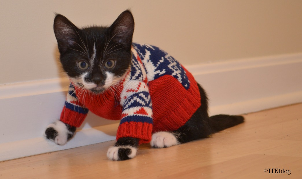 Kitten Christmas Sweater.Tails From The Foster Kittens The Kittens Christmas